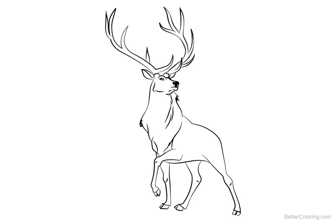 Rocky Mountain Animals Coloring Pages - Free Printable Coloring Pages