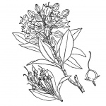 Rocky Mountain Plants Coloring Pages Wildflower