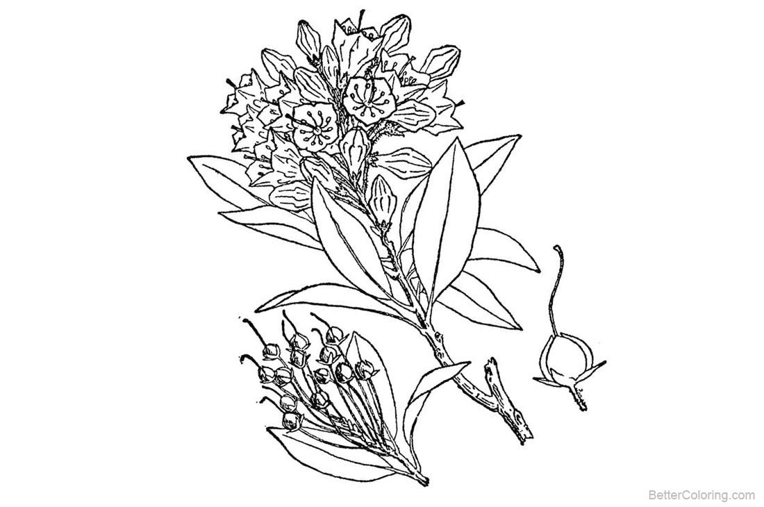 Rocky Mountain Plants Coloring Pages Wildflower Free