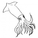 Squid Coloring Pages Clipart