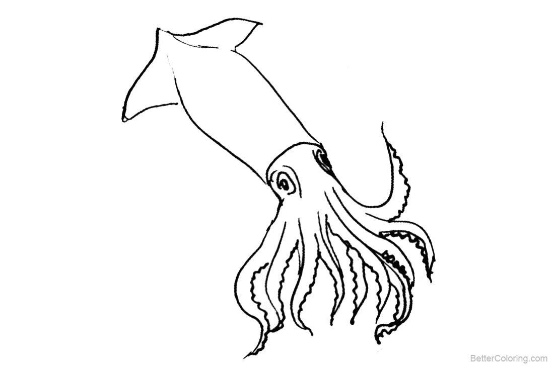 Squid Coloring Pages Clipart Free Printable Coloring Pages