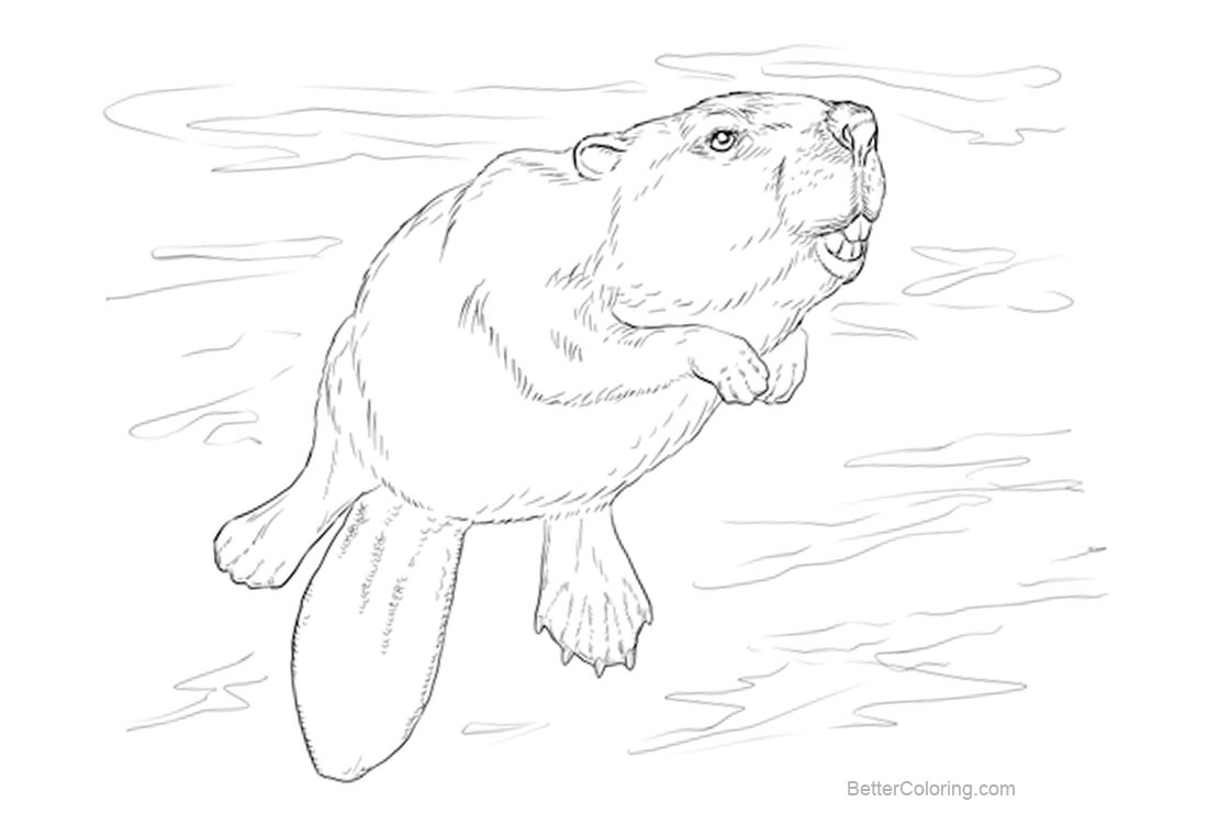Free Swimming Beaver Coloring Pages printable
