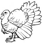 Turkey Coloring Pages Line Art