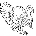 Turkey Coloring Pages Realistic Line Drawing