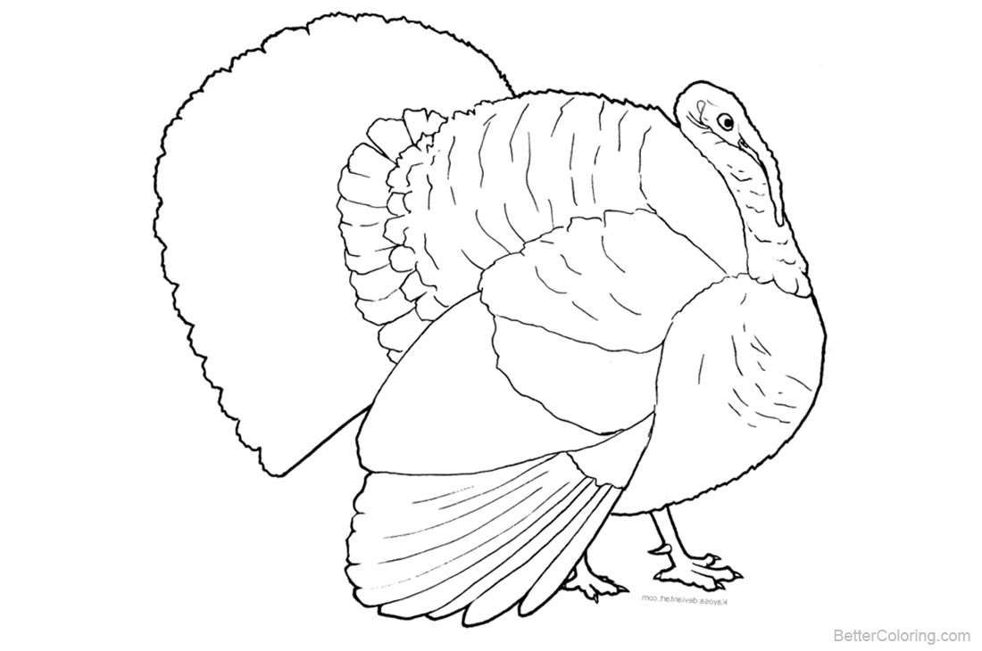 Turkey Coloring Pages printable for free