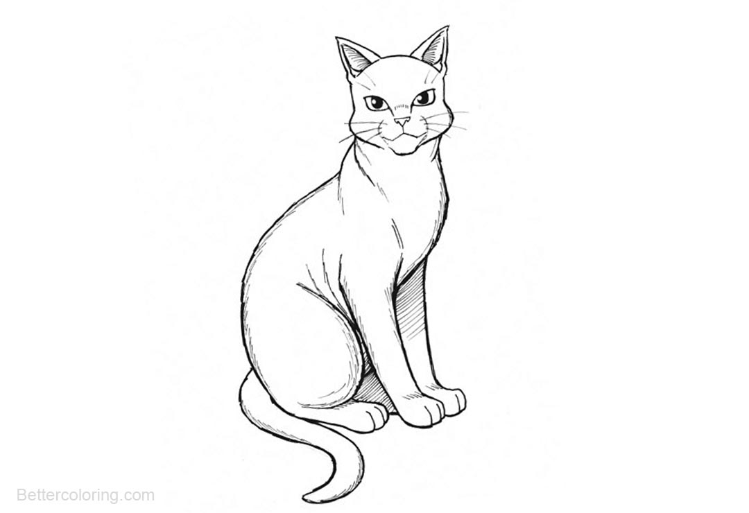 Free Warrior Cats Coloring Pages Sitting printable