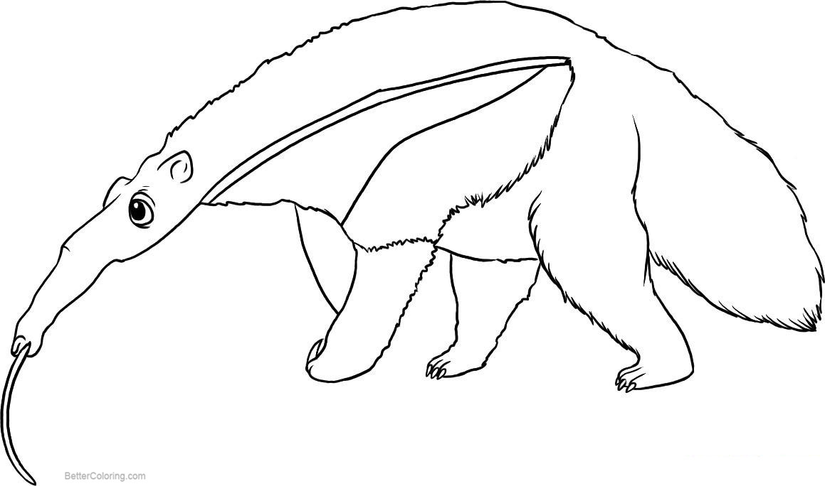 Free Anteater Coloring Pages Realistic Line Drawing printable