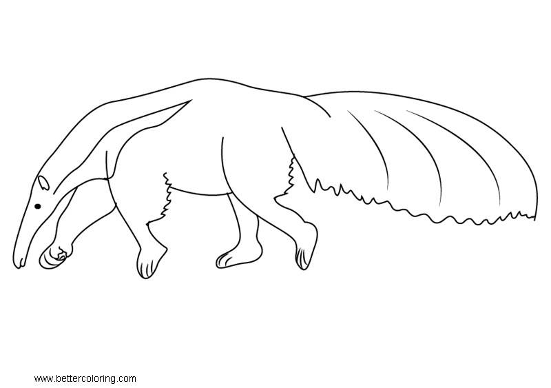 Free Anteater Coloring Pages Wild Animals printable