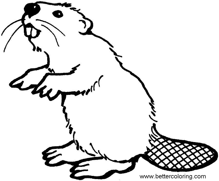 Free Beaver Coloring Pages Clipart Black and White printable