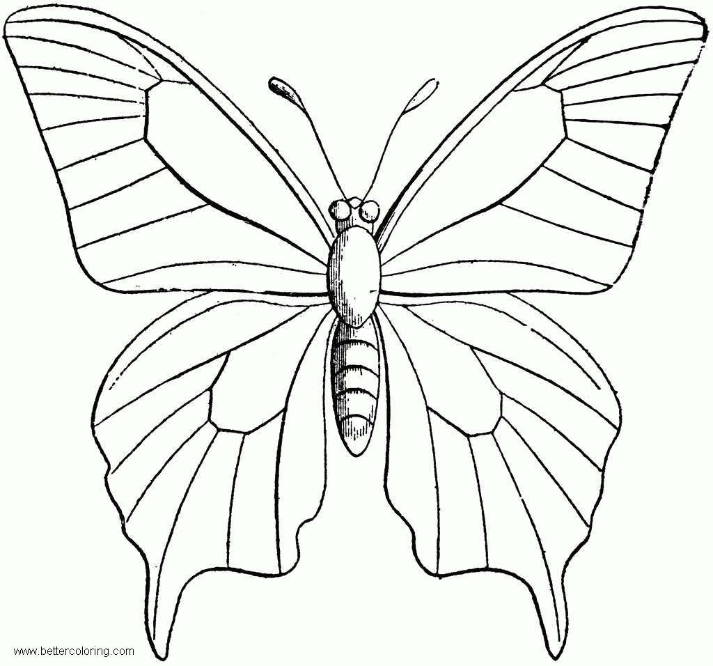 Free Butterfly Coloring Pages Clipart printable