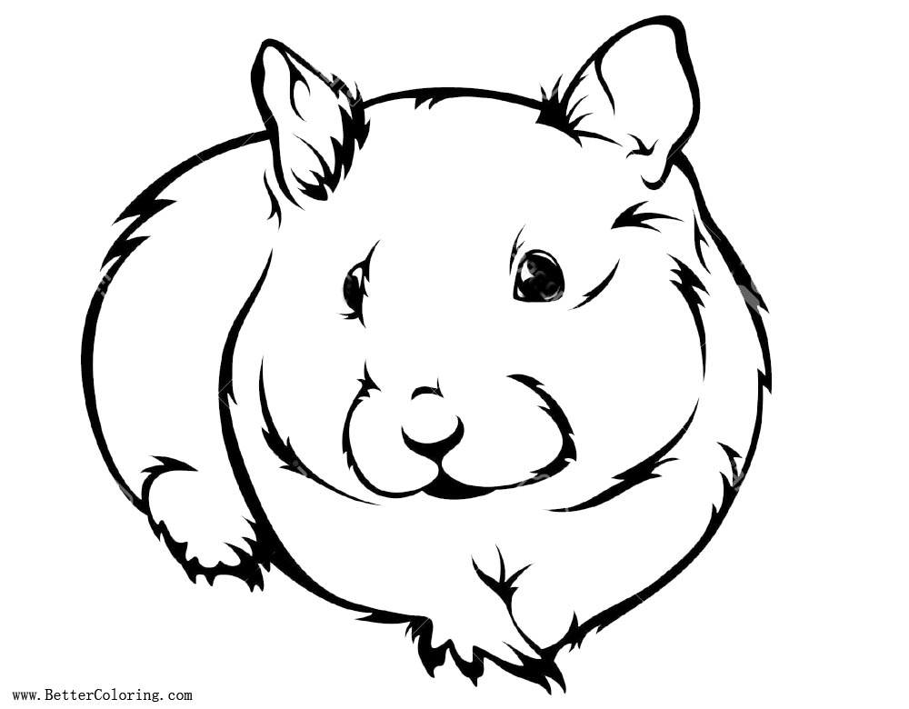 Hamster Coloring Pages Realistic Drawing Free Printable