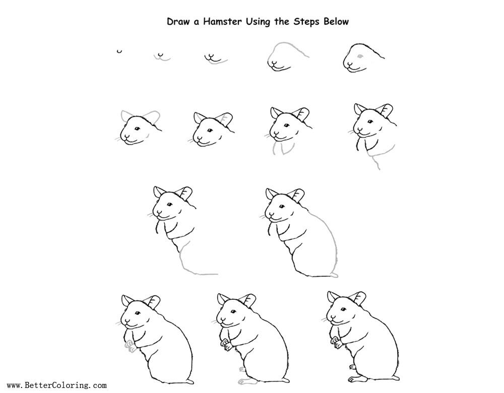 Free How to Draw Hamster Coloring Pages printable