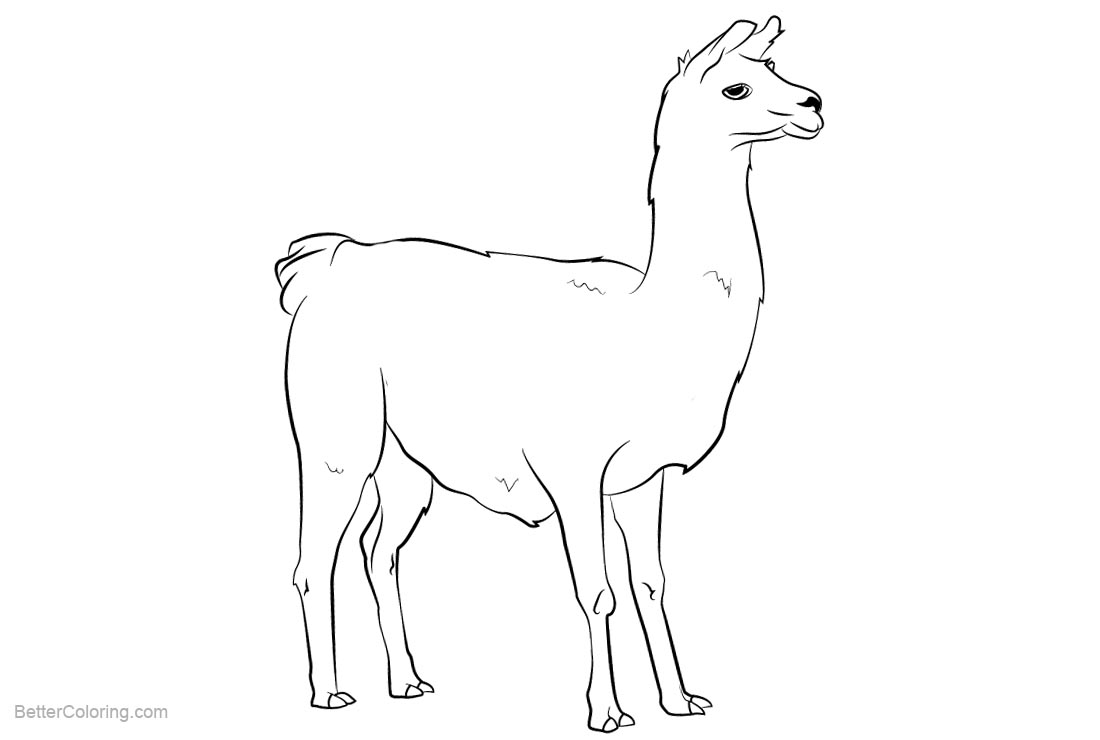 Free Llama Coloring Pages Clipart printable
