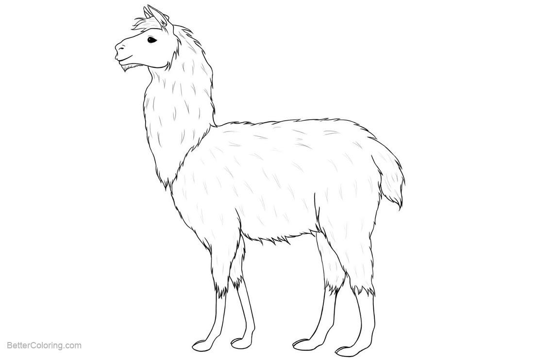 llama coloring pages realistic drawing free printable