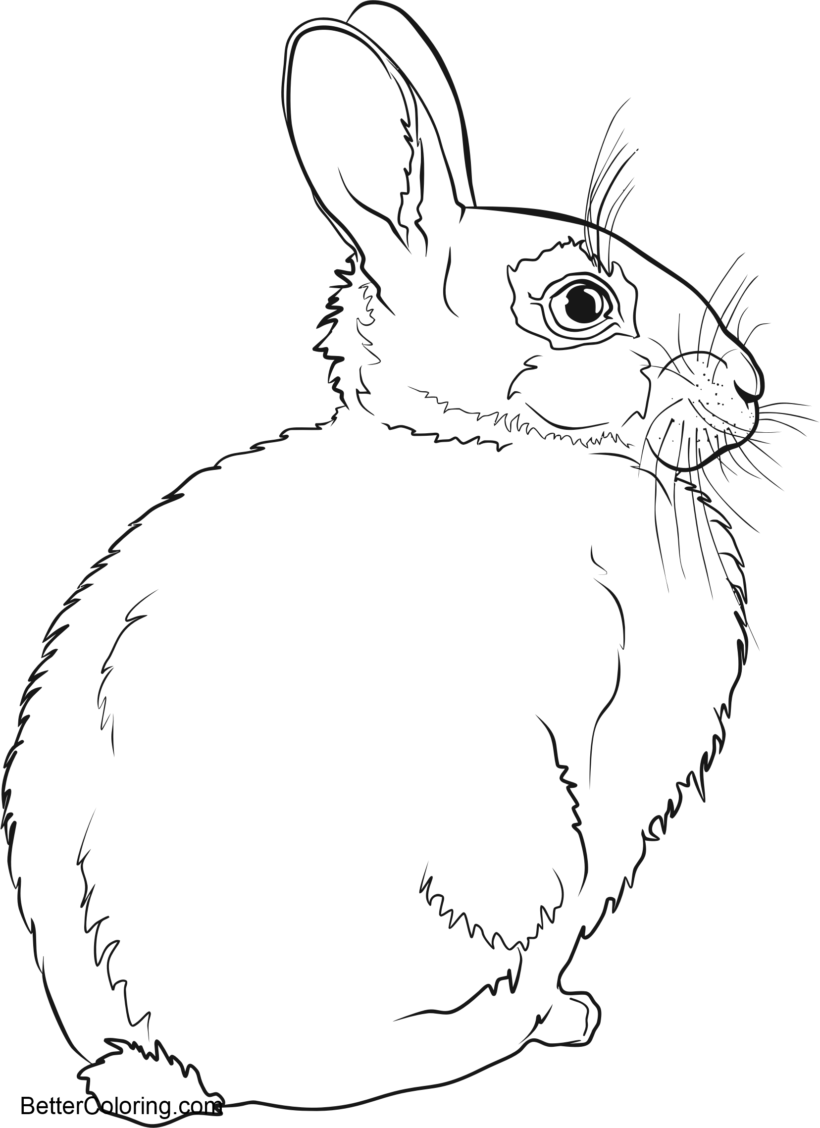 Free Rabbit in Winter Coloring Pages printable