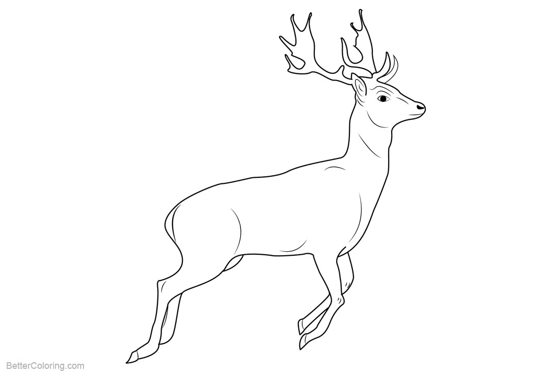 Free Realistic Reindeer Coloring Pages printable