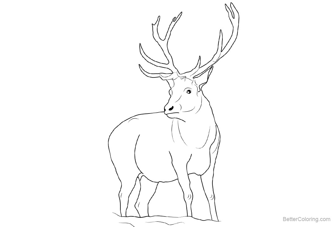 Free Strong Reindeer Coloring Pages printable