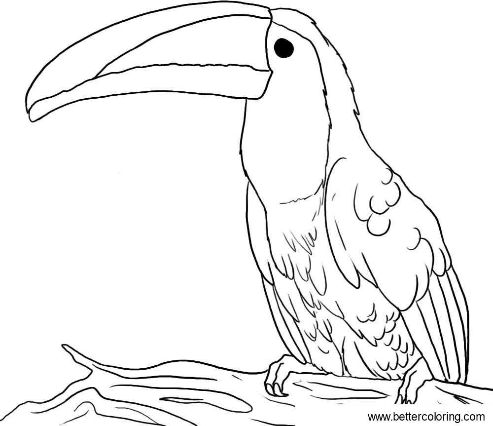 Free Toucan Coloring Pages Realistic Drawing printable