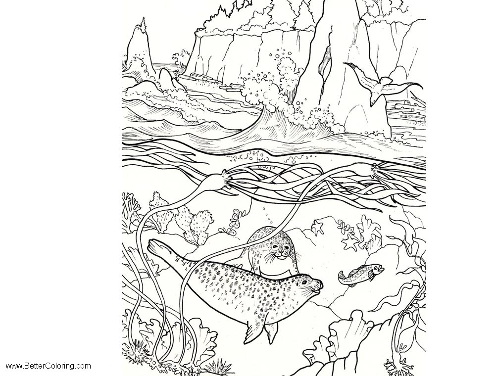 Free Under The Sea Coloring Pages Sea Life Seals printable