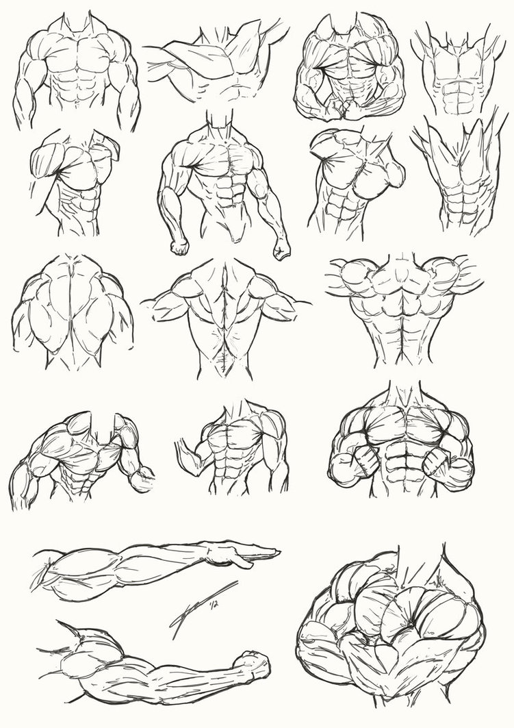 Free Anatomy Coloring Pages Male Torso Anatomy 2012 by Juggertha printable