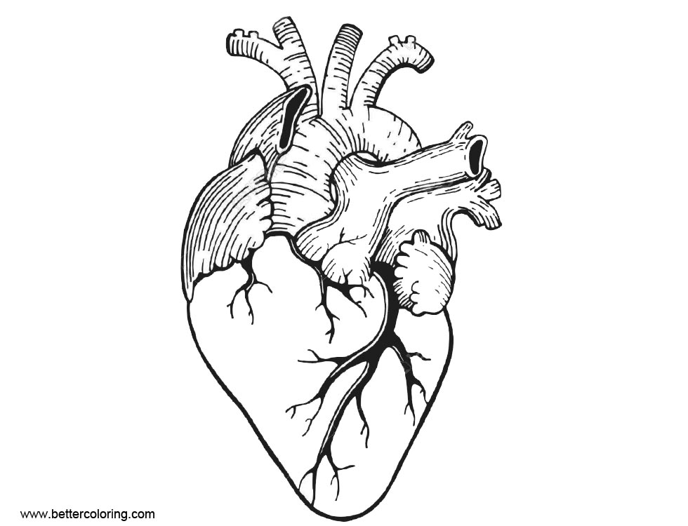 Anatomy Coloring Pages Realistic
