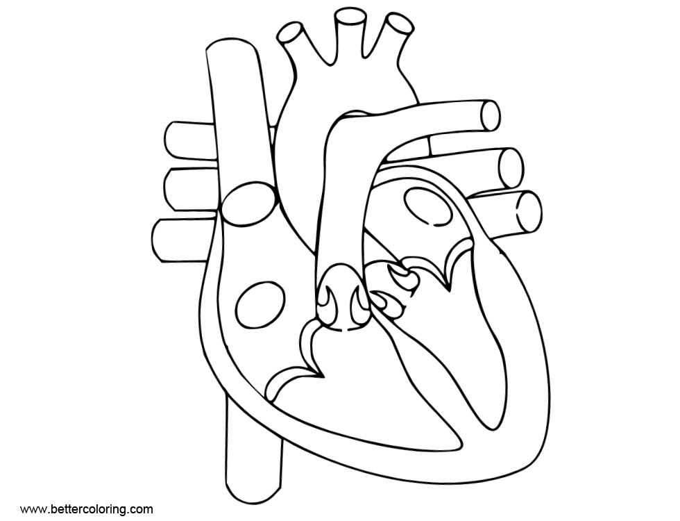 Free Anatomy Coloring Pages of Human Heart printable