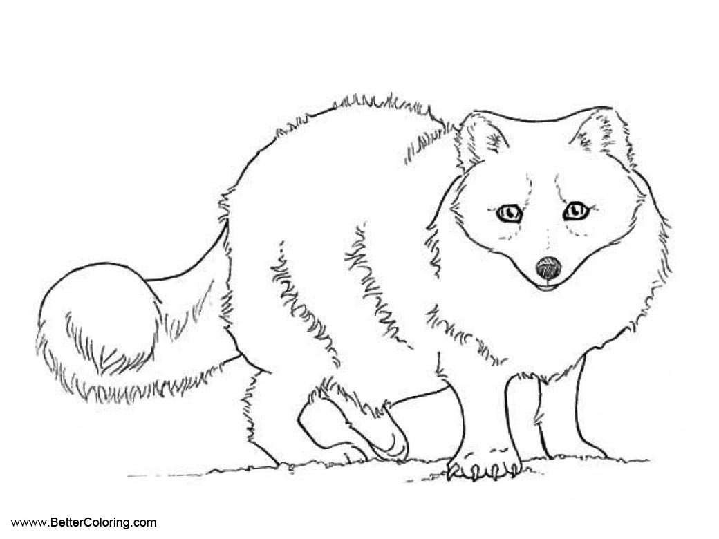 Arctic Tundra Animals Coloring Pages Arctic Fox - Free Printable ...