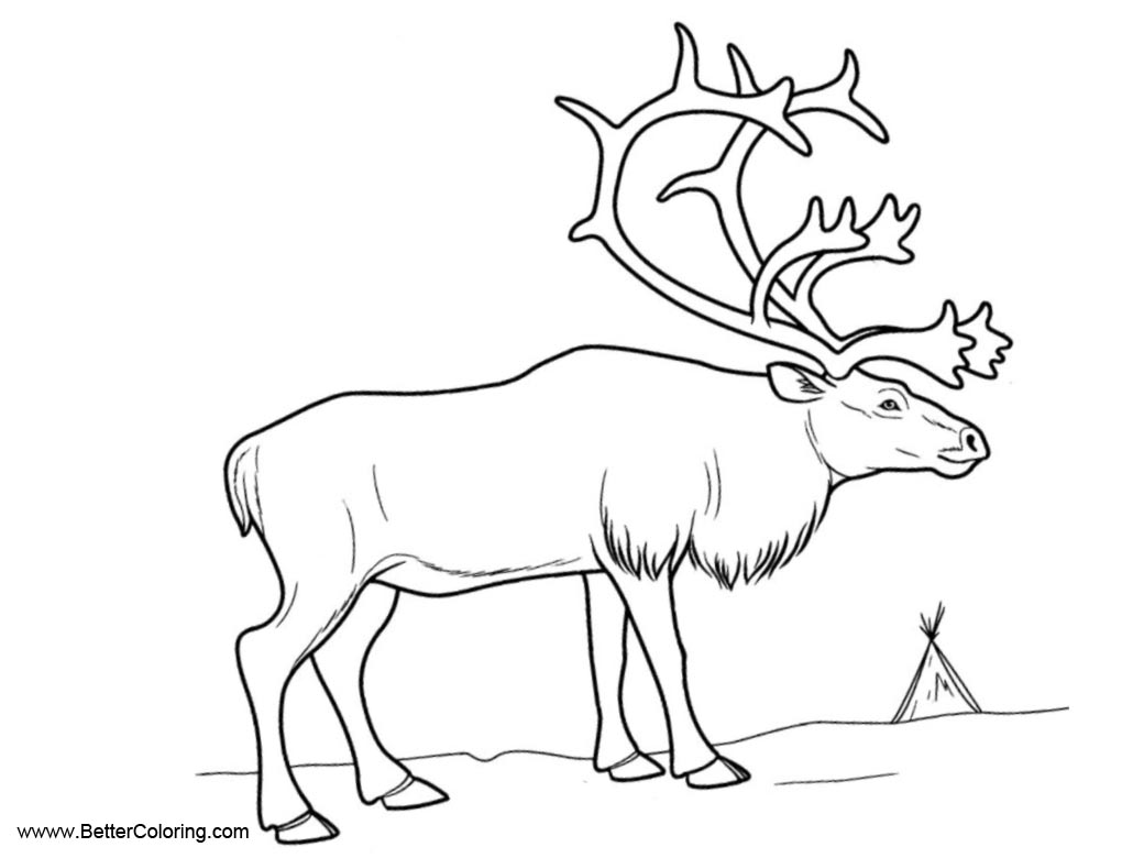 Free Arctic Tundra Animals Coloring Pages Reindeer Printable For Kids And  Adults.
