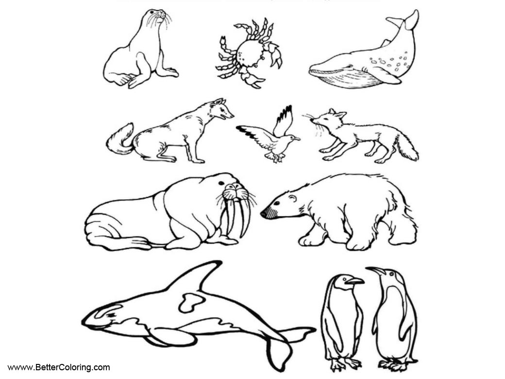 Free Arctic Tundra Animals Coloring Pages printable