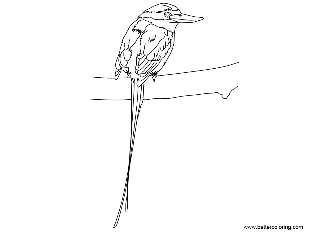 Free Buff Breasted Paradise Kingfisher Coloring Page printable