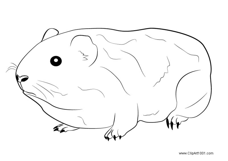 Free Cute Guinea Pig Coloring Pages printable