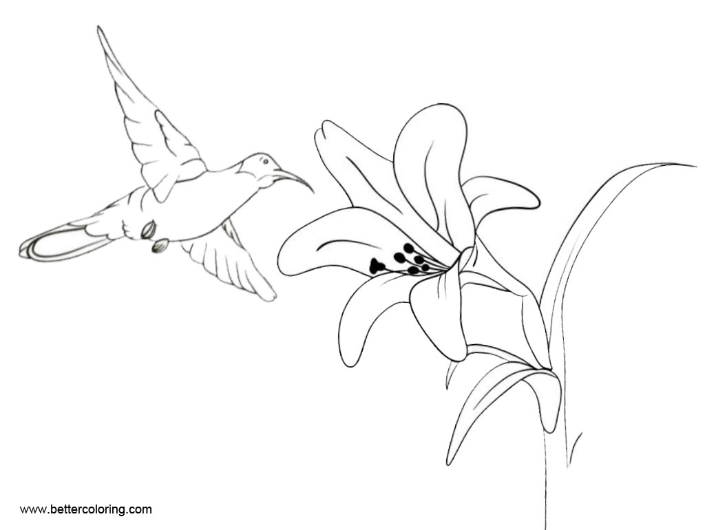 Flower and Hummingbird Coloirng Pages - Free Printable ...