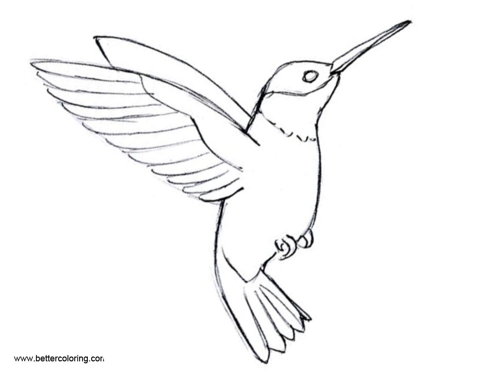 Free Flying Hummingbird Coloirng Pages printable