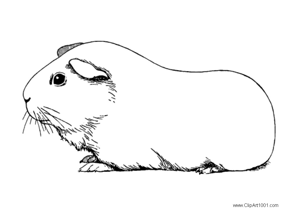 Guinea Pig Coloring Pages Black