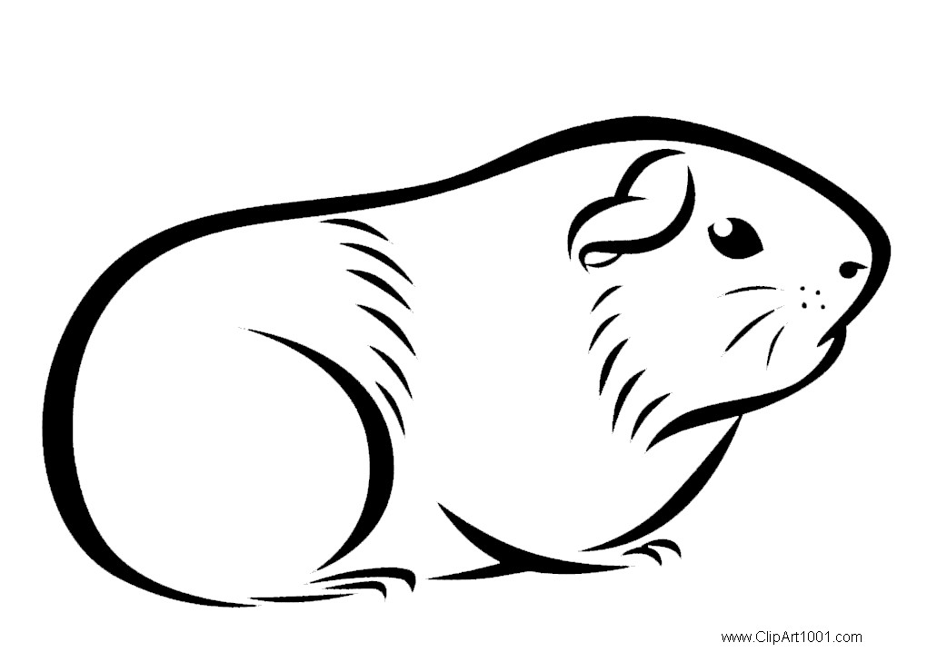 Guinea Pig Coloring Pages Drawings
