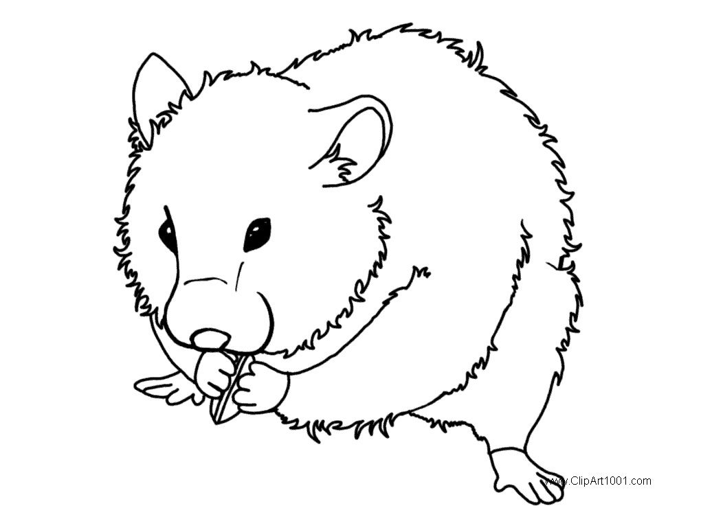 Guinea Pig Coloring Pages Eating