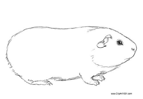 Free Guinea Pig Coloring Pages Line Art printable