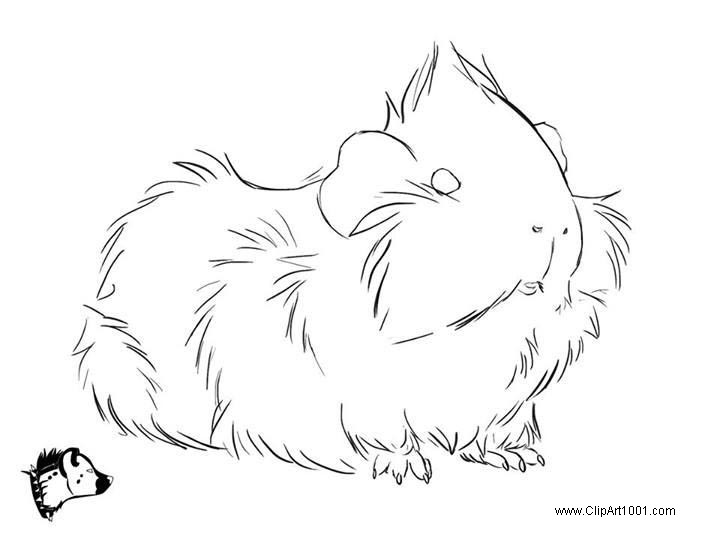 Free Guinea Pig Coloring Pages Longhaired printable