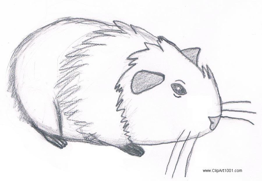 Free Guinea Pig Coloring Pages Pencil Sketch by may i tutchem printable