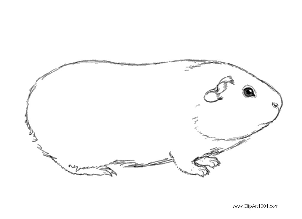 Free Guinea Pig Coloring Pages Sketch Drawing printable