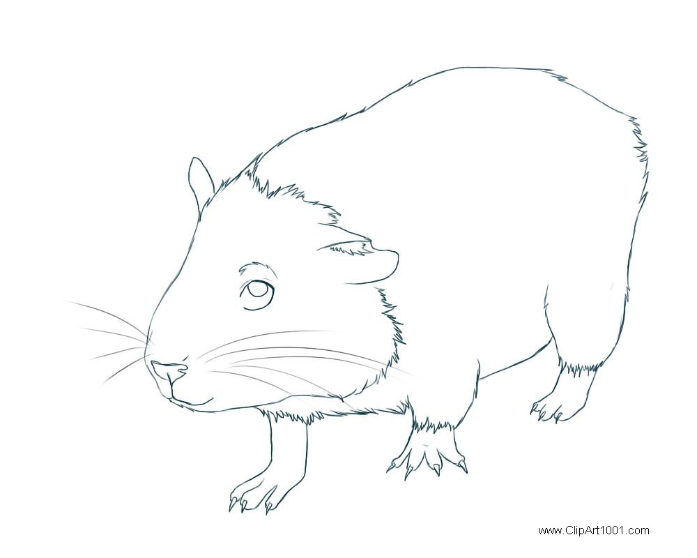 Free Guinea Pig Coloring Pages by Melaara printable