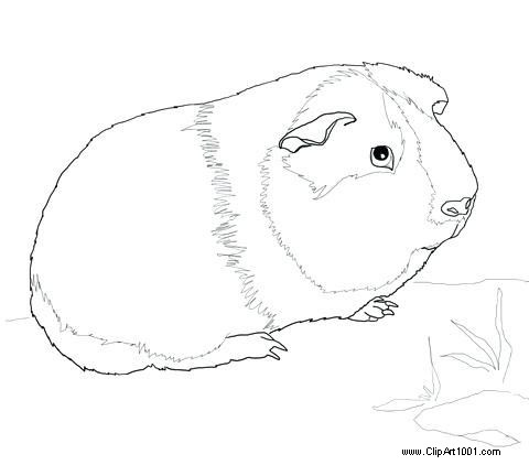 Free Guinea Pig Coloring Pages by the Pool printable