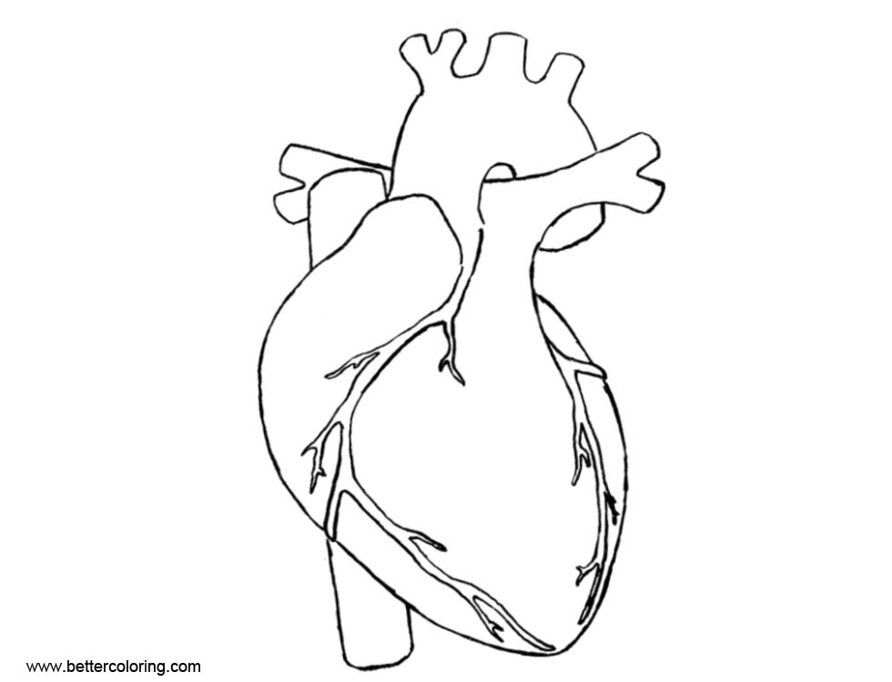 Human Heart Anatomy Coloring Pages - Free Printable Coloring Pages