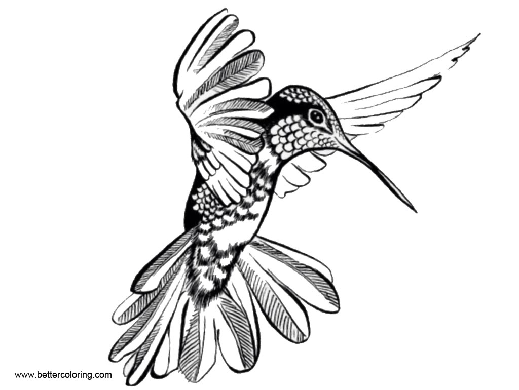 Free Hummingbird Coloirng Pages Designs by Ryn printable