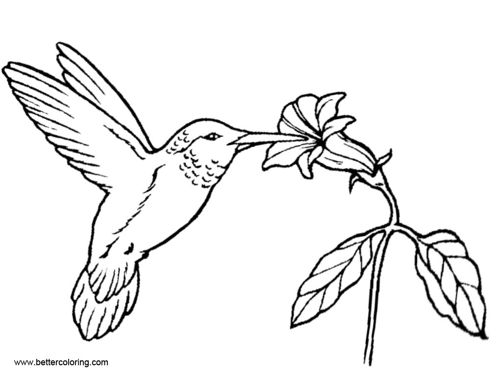 Free Hummingbird Coloirng Pages Line Art printable