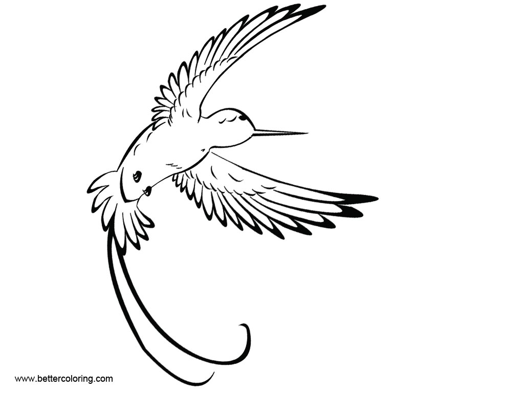 Free Hummingbird Coloirng Pages Tattoo printable