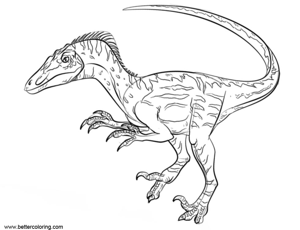 Free Jurassic World Fallen Kingdom Coloring Pages How to Draw Velociraptor printable