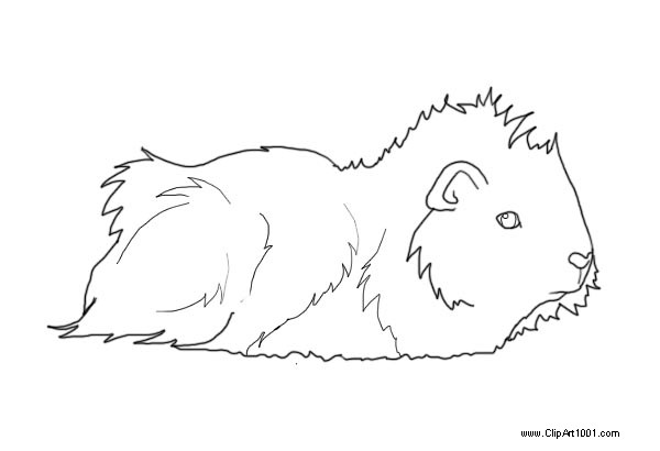 Free Longhaired Guinea Pig Coloring Pages Lineart by AshleyPhotographics printable