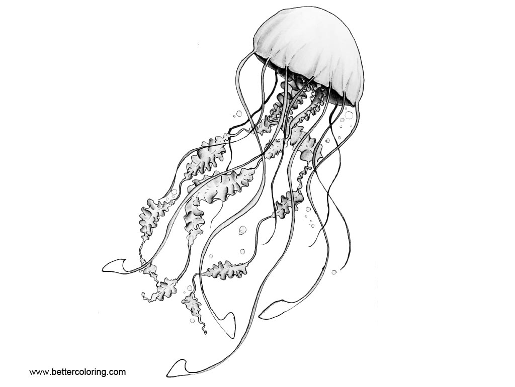 Free Moon Jellyfish Coloring Pages printable