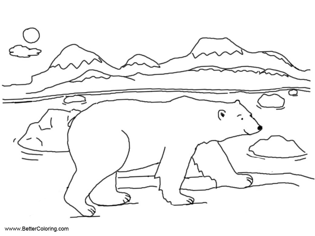 Ploar Bear from Arctic Tundra Animals Coloring Pages ...